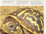 Above Ground Turtle Pond Kit Pdf Delayed Trait Development and the Convergent Evolution Of Shell