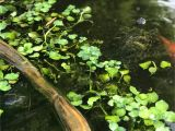 Above Ground Turtle Pond Pin by Heather K On Turtles Turtle Water