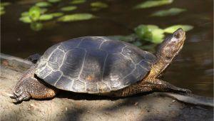 Above Ground Turtle Pond Western Pond Turtle Turtles Pinterest Turtle Pond Turtle and