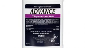 Advance Carpenter Ant Bait Home Depot Advance Carpenter Ant Bait Free Shipping Domyown Com