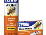 Advance Carpenter Ant Bait Home Depot Termite Bait Stations Home Depot Termites Amazon Com Terro T600