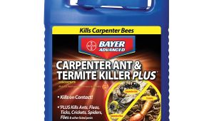 Advance Carpenter Ant Bait Lowes Shop Bayer Advanced 1 Gallon Carpenter Ant Termite