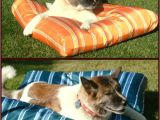 Anti Chew Dog Beds Australia No Chew Bed 28 Images No Chew Bed 28 Images No Chew