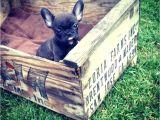 Anti Chew Raised Dog Beds Dachshund Hot Dog Bun Bed Anti Chew Raised Dog Beds Noten