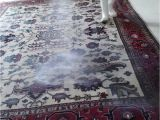 Area Rug Cleaning Boca Raton New 28 area Rug Cleaning Boca Raton Rug Cleaning Boca