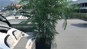 Artificial Palm Trees for Sale In Canada Artificial Silk Palm Tree 6 5 Foot Uv Rated for Outdoor and Indoor