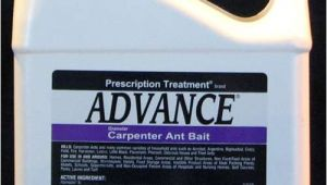 Basf Advance Carpenter Ant Bait Advance Carpenter Ant Bait Pest Control Supplies
