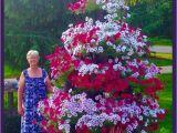 Beat Your Neighbor Fertilizer 10 Besten Hummingbird Flowers Bilder Auf Pinterest