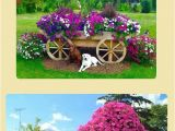 Beat Your Neighbor Fertilizer 1814 Best Garden Hacks Images On Pinterest Plants Balcony and Flower