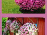 Beat Your Neighbor Fertilizer 349 Best In My Flower Garden Images On Pinterest Gardening