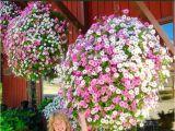 Beat Your Neighbor Fertilizer 49 Best Flowers Images On Pinterest Backyard Ideas Garden Ideas