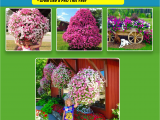 Beat Your Neighbor Fertilizer Home for Beat Your Neighbor Plant Food Fertilizer Yard Ideas