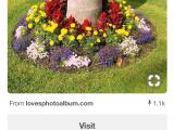 Beat Your Neighbor Fertilizer Pin by Cindy Krigbaum On Landscaping Pinterest Gardens