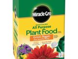 Beat Your Neighbor Plant Food and Fertilizer Plant Food Fertilizer Plant Care the Home Depot