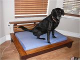 Bedside Platform Dog Bed for Sale orvis Pet Beds Cvs Dog Beds Dog Beds U Gallery Dog