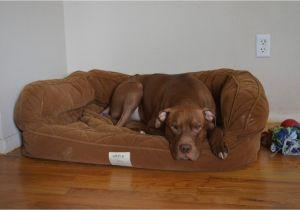 Bedside Platform Dog Bed orvis Bedside Platform Dog Bed Content Filed Under the Dog
