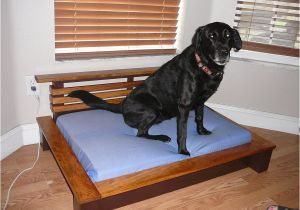 Bedside Platform Dog Bed orvis Pet Beds Cvs Dog Beds Dog Beds U Gallery Dog