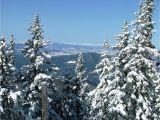 Best Trees for Colorado Snowy Colorado Trees Colorado Scenery Snowy Scenes In the