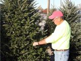 Best Trees for Colorado Tis the Season Nothing Says Christmas More Than the Tree Local