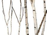 Birch Branches Hobby Lobby Birch forks 5 39 Up to 8 39