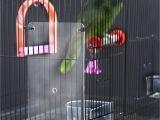 Bird Cage Seed Guard Acrylic Bird Cage Seed Guard Acrylic Birdcage Design Ideas