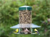 Birds Choice Classic Bird Feeder with Squirrel Baffle and Pole Duncraft Com Birdschoice Classing Hanging Feeder