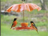 Birds Choice Flower oriole Bird Feeder Small orange oriolefest oriole Feeder Birds Choice