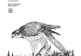 Black Hawk Pest Control Rockford Il Pdf Ponderosa Pine Mixed Conifer and Spruce Fir forests