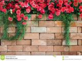 Blossoms On the Bricks Flowers On the Brick Wall Stock Image Image Of Background
