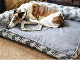 Bolster Dog Bed Costco Bolster Beds at Costco Everything Else Greyhound Greytalk