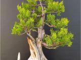 Care Instructions for Ficus Microcarpa Ginseng Ficus Pflege Ficus Ginseng Bonsai Oder Baum