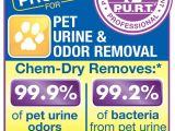 Carpet Cleaning Oshkosh Wi Chem Dry Of Oshkosh Carpet Cleaning Oshkosh Wi Phone Number