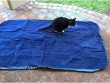 Cat Proof Air Mattress Cat Proof Air Mattresses Choose One or Protect the One