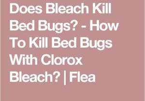 Clorox Bleach and Bed Bugs 17 Best Ideas About Killing Bed Bugs On Pinterest What