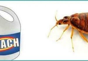 Clorox Bleach and Bed Bugs Clorox Bleach and Bed Bugs Bgcnsv Com