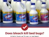 Clorox Bleach and Bed Bugs Does Bleach Kill Bed Bugs the Answer Might Surprise You