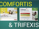 Comfortis for Dogs 20 40 Lbs Trifexis Vs Comfortis for Dogs Comfortis Vs Trifexis Chewable