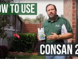 Consan Triple Action 20 How to Use Consan Triple Action 20 Fungicide Youtube