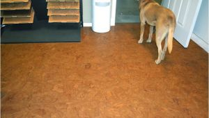 Cork Flooring Good for Dogs Best Flooring for Dogs Quiet Corner