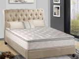 Cushion Firm Vs Plush Pillow top Shop Continental Sleep Medium Plush Pillowtop orthopedic Type