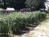 Dallas Craigslist Farm and Garden by Owner fort Smith Farm Garden by Owner Craigslist Autos Post