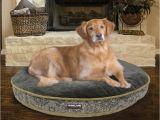 Dog sofa Bed Costco Costco Dog Bed Custom Costco Uk Kirkland Signature X