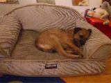 Dog sofa Bed Costco Dog Bed Costco Korrectkritterscom