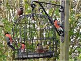 Dove Proof Bird Feeders the Bird Cage Anti Squirrel and Pigeon Proof Bird Feeder