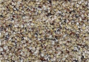Dreamweaver Polyester Carpet Reviews Dream Weaver Carpet