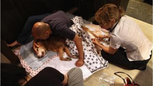 Euthanize Dog at Home Sleeping Pills How to Euthanize A Dog with Sleeping Pills Things to