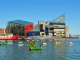 Family Activities Baltimore area National Aquarium In Baltimore Visitors Guide