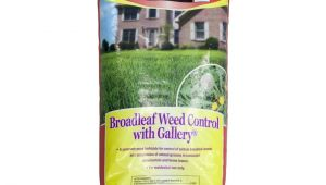 Fertilome Broadleaf Weed Control with Gallery Ferti Lome Broadleaf Weed Control with Gallery