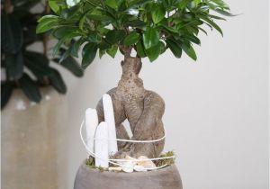 Ficus Microcarpa Bonsai Tree Care Arrangement White Beach You Can Create This Beautiful Natural