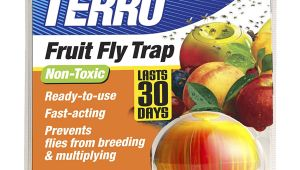 Fruit Fly Bar Pro Amazon Com Terro Fruit Fly Trap T2500 Home Pest Control Traps